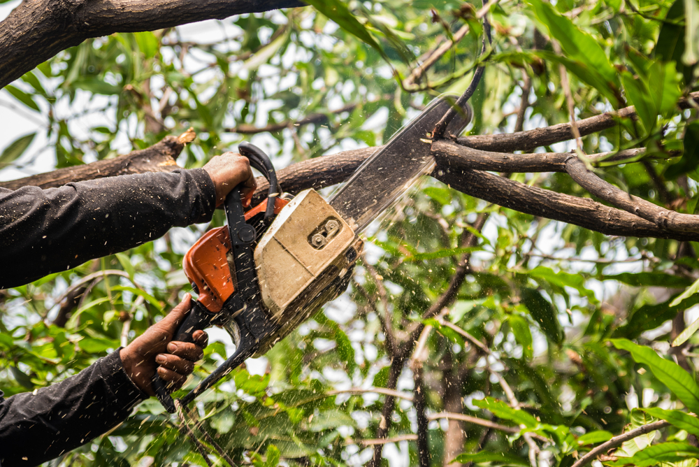 Tree Surgeon in Manchester