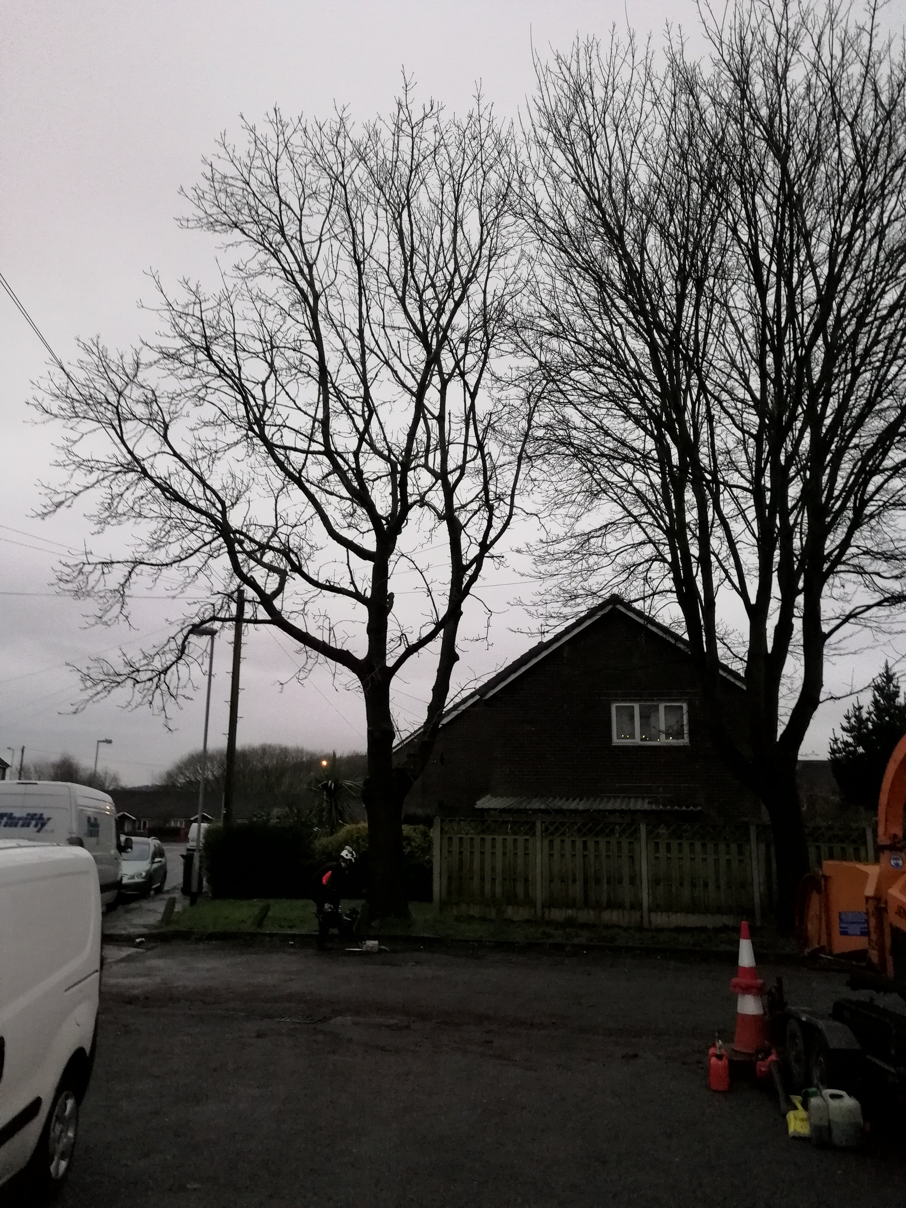 Ash tree removal in Hyde before