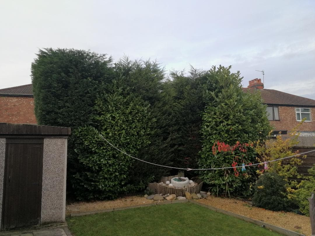 Conifer Hedge Reduction Urmston After