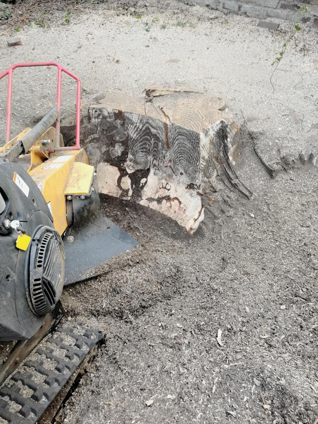 Grinding out a large beech tree stump in Hale during