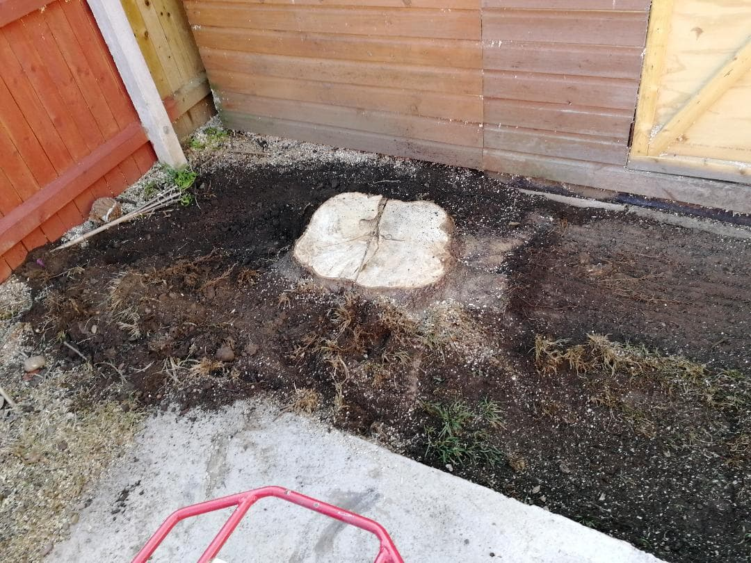 Stump grinding in Sale Before