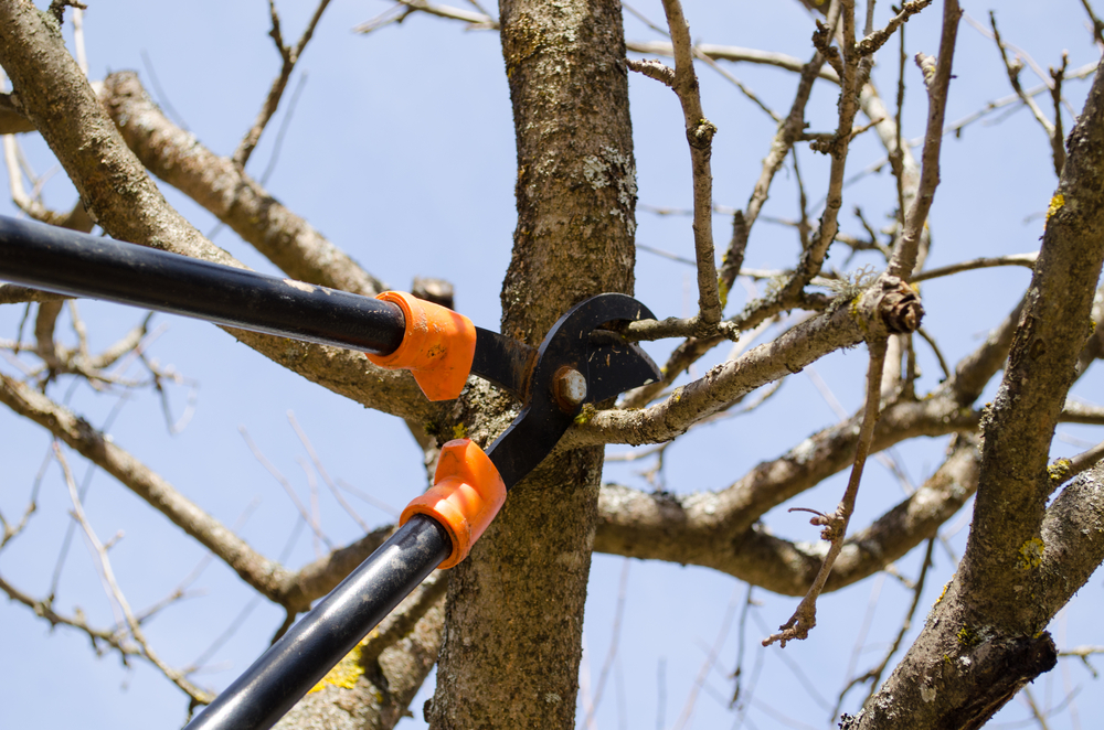 Tree Pruning Manchester