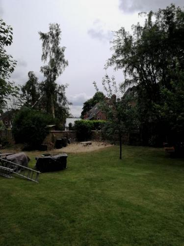 Beech tree removal tree removal in Hale