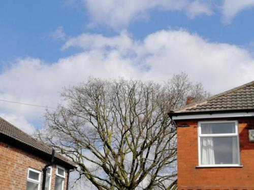 Oak tree reduction in Manchester