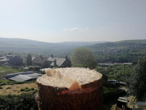 Removing a pine tree in New Mills