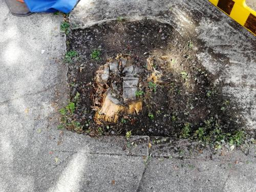 Stump grinding in Manchester Before