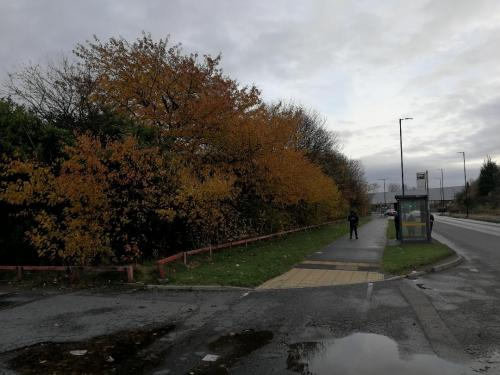 Tree Clearance Trafford Park Before