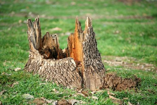 Why Would I Need Tree Stump Removal Services?
