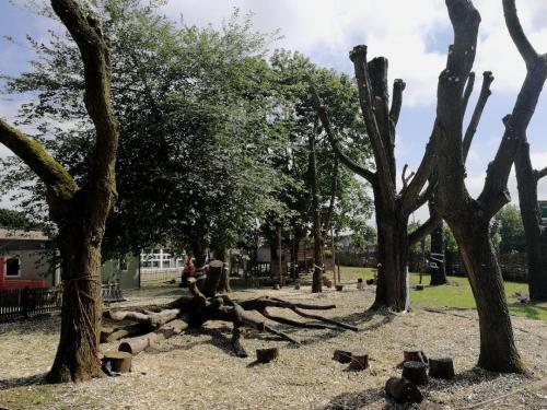thumbnailPolarding Willow trees for a school in Manchester